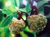 frutas_do_brasil_20