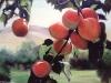 frutas_do_brasil_40