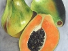frutas_do_brasil_42