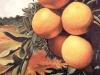 frutas_do_brasil_43