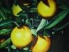 frutas_do_brasil_49