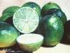frutas_do_brasil_61